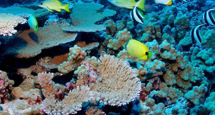 Hikkaduwa Corals Sanctuary