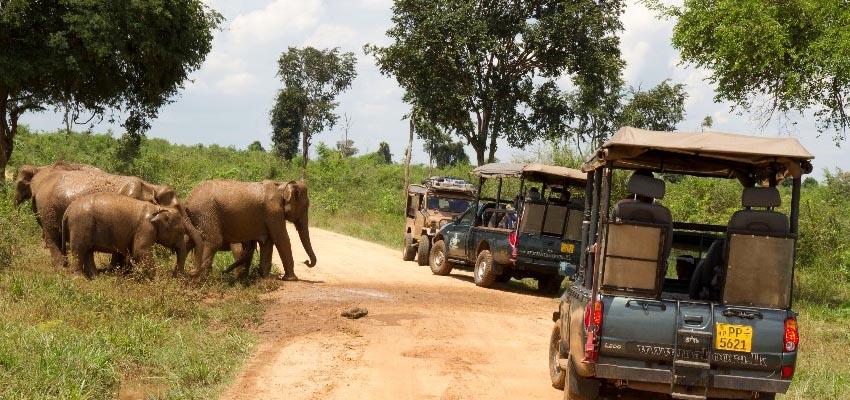 udawalawe safari1