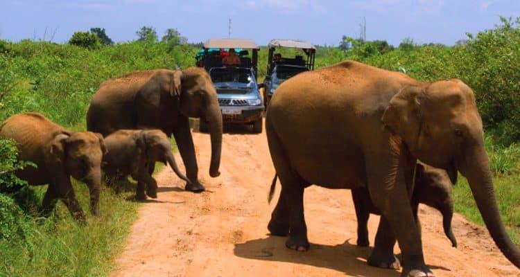 udawalawe safari2